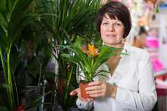 Customer choosing bromelia Royalty Free Stock Photos