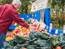 Customer selects peppers from farm stand at Farmers Market. Corvallis, OR, October 24, 2015: Man customer selects peppers from vegetable display at Farmers Stock Photos