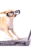 Customer service. Shot of dog customer service Royalty Free Stock Photos