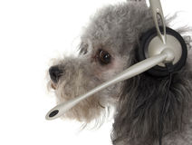 Customer Service Pup Royalty Free Stock Images