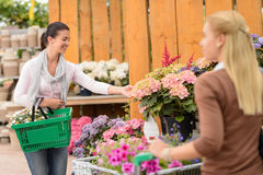 Customer woman shopping flowers in garden center Royalty Free Stock Photo