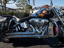 Customized Harley Davidson motorcycle Royalty Free Stock Image