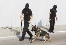 Customs drugs detection dog Stock Images