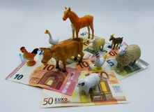 Custos para a criação de animais dos rebanhos animais, conceito imagem de stock royalty free