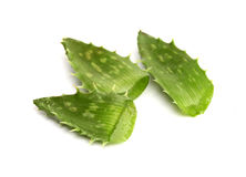 Cut aloe vera leaves Stock Photos
