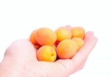 Cut apricot in a man´s Royalty Free Stock Images