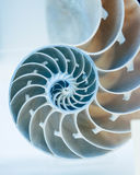 Cut away of Nautilus shell Stock Image