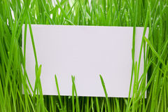 Cut-away to a grass Stock Images