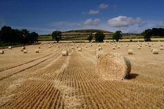 Cut and Baled. Barley field after the baling royalty free stock photos