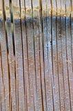 Cut bamboo. Royalty Free Stock Photo