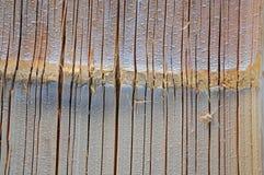 Cut bamboo. Stock Images