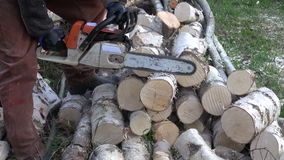 Cut birch firewood in farm with chainsaw stock footage