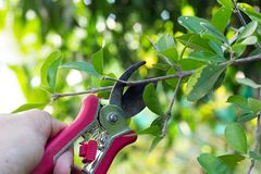 Cut branches gardening. Cut branches tree. gardening with holiday Stock Images
