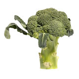 Cut broccoli on a white Stock Images