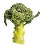 Cut broccoli on a white Royalty Free Stock Photography