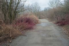 Cut brown leafless branches of trees bushes by road way in winter mud. Chips royalty free stock images