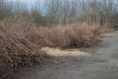 Cut brown leafless branches of trees bushes by road way in winter mud. Chips stock images
