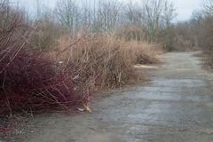 Cut brown leafless branches of trees bushes by road way in winter mud. Chips royalty free stock photos