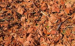 Cut brush browning in sunlight. A pile of cut brush on the ground browning in the sunlight stock images