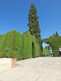 Cut  bush in gardens of Alhambra, Stock Images