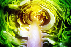 Cut cabbage Stock Photography