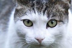 Cut cat Royalty Free Stock Photo