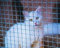 Cut cat Stock Photos