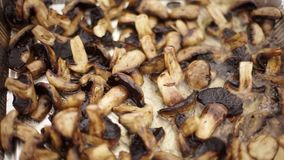 Cut champignons are fried in oil. stock video footage