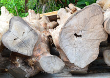 Cut and chopped wood. In construction yard Stock Images