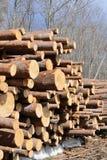 Fresh piled tree. Stock Photography