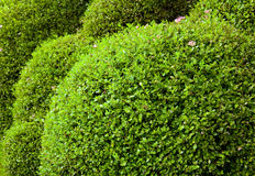 Cut circle bushes Royalty Free Stock Photography