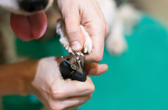 Cut the claws dog, green table Royalty Free Stock Images