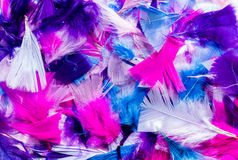 Cut Color Feathers Royalty Free Stock Photography