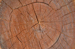 Cut of cork tree 1 Royalty Free Stock Image