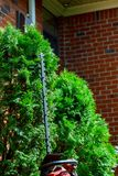 Cut decorative trees in the garden stock photo