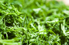 Cut dill Royalty Free Stock Image