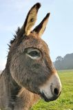 Cut donkey Stock Photo