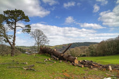 Cut down forest scenery. Cut down tree on irish valley Royalty Free Stock Photography
