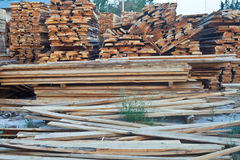 Cut down forest Stock Image