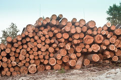 Cut down forest Royalty Free Stock Images