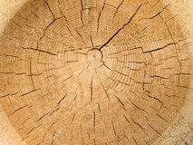 The cut down tree. Structure of the old cut off tree Royalty Free Stock Photos