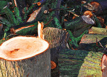 Cut down tree branches Royalty Free Stock Photos
