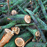 Cut down tree branches Royalty Free Stock Images