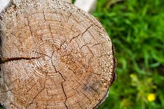 Cut down a tree on a green blurred background royalty free stock photo