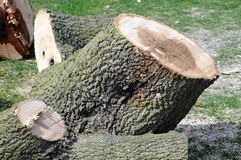 Cut down tree. Logs and large portions of a cut down tree Royalty Free Stock Images