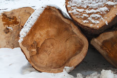 Cut down a tree in the snow. Bunch of felled trees in the snow stock image