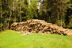 Cut-down trees Stock Photos