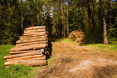 The cut down trees combined together Stock Images