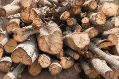Cut down trees - Effects of destruction forests, Global warming, Royalty Free Stock Photography