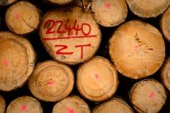 Cut down trees Royalty Free Stock Photos